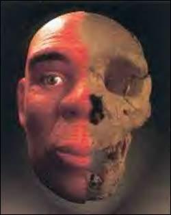 """Reaparece el """"Homo antecessor"""". Nuevos fósiles de Atapuerca avalan que la humanidad desciende de esta especie"""