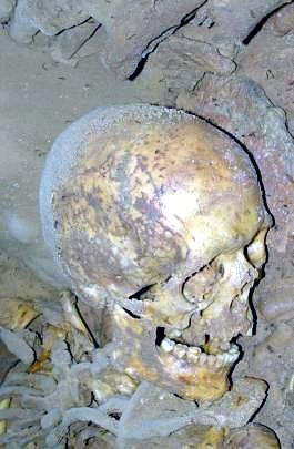 CráneoCuevaArinteroLeón 001TA