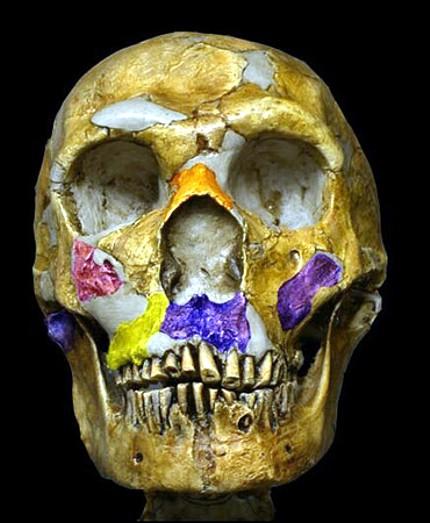 NeanderthalCraneoTA