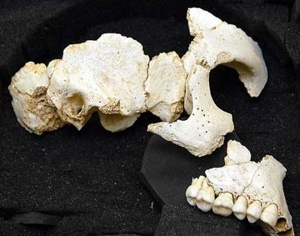 Homínido Atapuerca TA