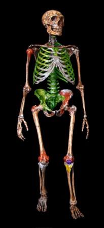 neanderthal3DTA