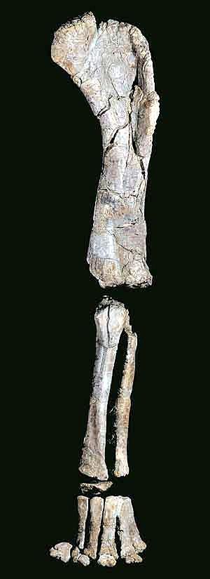 Turiasaurus Riodevensis 09