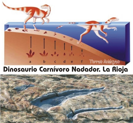 Dino nadador La Rioja