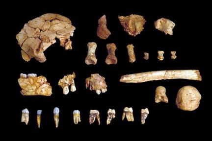 Homo antecessor de la Gran Dolina