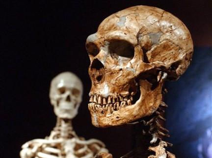 Cráneo de Neanderthal