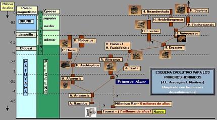 arbolhominidosArsuagaTA2
